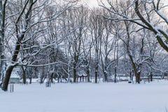 Kronvalda parkerar i centrala Riga i vintern arkivbilder