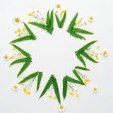 Kroon met kamilleranunculus en bladeren van groene varen Royalty-vrije Stock Afbeeldingen