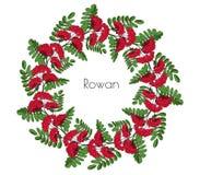 Kroon rode lijsterbes Ornamenttakje van lijsterbes of ashberry decoratieve elementencirclet bladeren en cluster van sorbusbes gee vector illustratie