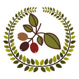 kroon van bladeren met de tak van de koffieboom Royalty-vrije Stock Foto