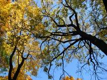 Kroon van bomen Stock Afbeeldingen