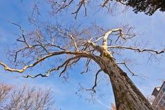 Kroon van boom met blauwe hemel royalty-vrije stock foto