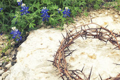 Kroon van doornen op rotsachtige grond met Texas Bluebonnets stock afbeelding