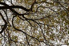 Kroon van een boom Stock Fotografie