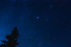 Kroon van Pijnboomboom op de Blauwe Achtergrond van de Nacht Sterrige Hemel De mening van de nacht Stock Foto
