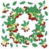 Kroonpatroon van braambes of framboos Bessenachtergrond voor textiel, behang, reeksen tekeningen, dekking, oppervlakte royalty-vrije illustratie