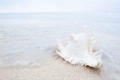 Kroonslak op het strand met pastelkleurkleuren Royalty-vrije Stock Afbeeldingen