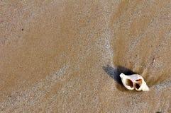 Kroonslak op het zand Stock Fotografie