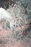 Kroost het Spaanse merrie weiden in olijftuin andalusia spanje gestemde kunst royalty-vrije stock foto