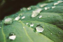 kropel świeża zielona liść rośliny woda Fotografia Royalty Free