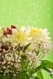 kropel kwiatów deszcz Obrazy Stock