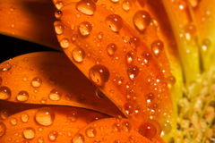 kropel kwiatu makro- pomarańcze woda obraz stock