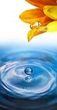 kropel kwiatu woda Zdjęcia Royalty Free