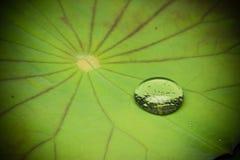 kropel liść lotosu woda Zdjęcia Stock