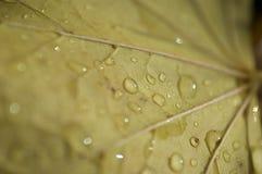 kropel liść macro Zdjęcie Stock