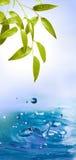 kropel liść pluśnięcia woda Fotografia Stock