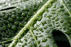 kropel liść woda Fotografia Stock