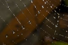 kropel pająka wody sieć Zdjęcie Royalty Free