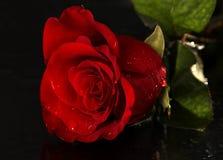 kropel róży woda obraz stock