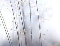 kropel rośliny trzonów woda Zdjęcia Royalty Free