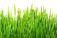 kropel trawy woda Obrazy Stock
