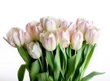kropel tulipanów woda Zdjęcia Royalty Free