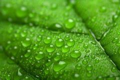 kropelek świeża zielona liść woda Zdjęcia Royalty Free