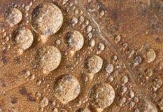 kropelek liść woda Zdjęcia Royalty Free