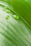 kropelek liść woda Zdjęcia Stock