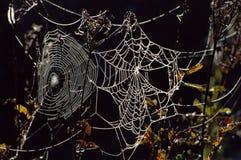 kropelek pająka wody sieć Zdjęcia Stock