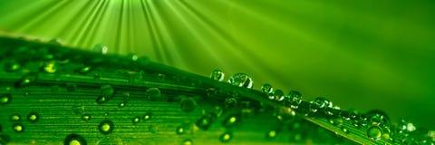 kropelek trawy woda fotografia royalty free