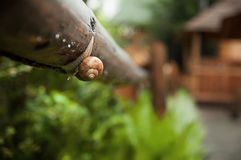 Kropelka i ślimaczek na liściu po deszczu zdjęcia royalty free