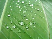kropelka liści, Obraz Stock
