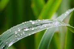 Kropelki deszczówki kłamstwo na długim cienkim liściu trawa zdjęcia stock