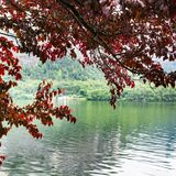 Kropelki na czerwonych liściach obrazy royalty free