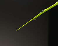 Kropelki na liść zielonych roślinach zdjęcia stock