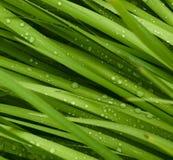 kropelki trawy. Zdjęcie Stock
