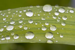 kropelki zielenieją liść Zdjęcia Stock