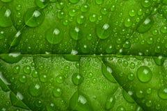 kropelki zielenieją liść wodę Zdjęcia Stock