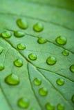 kropelki zielenieją liść wodę Obrazy Stock