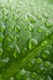 kropelki zielenieją liść wodę Obraz Stock