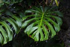 Kropelki zielony liść obrazy royalty free