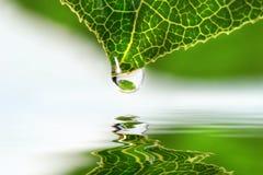 kropelkowy liść nad wodą Zdjęcie Royalty Free