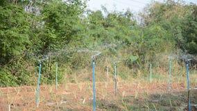 Kropi podlewanie w cytryny trawie zbiory