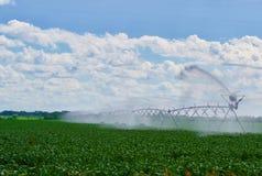 Kropidła podlewania kukurudza Fotografia Royalty Free