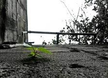 Kropka życie zdjęcie stock