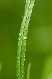 kroplę wody Obraz Stock