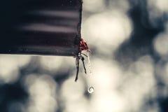 kroplę wody Fotografia Royalty Free