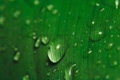 kropla deszczu w liściach bananowy Obrazy Royalty Free