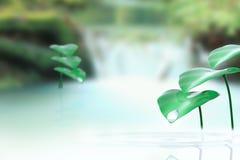 Kropla i rośliny blisko siklawy Fotografia Stock